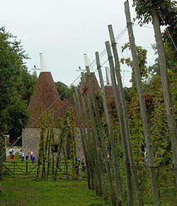Oast and Hops