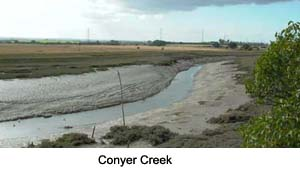 Conyer Creek