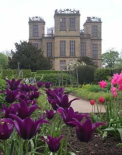 Hardwick Hall Tulips