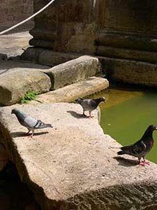 Roman Baths and Baths and Pigeons