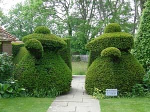 Coffeepot Topiary